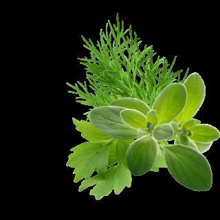 Transylvanian Herbs Content Pl